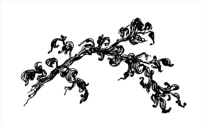 Смоковница. Автор рисунка: Вера Маханькова