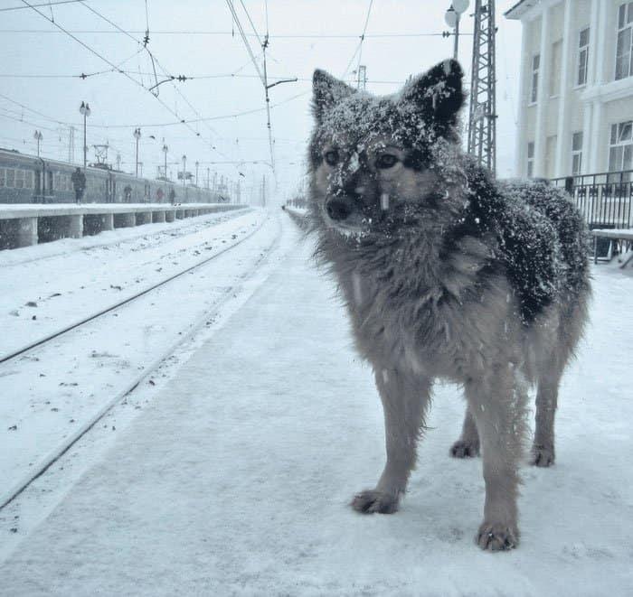 Фото Олега Саломакина