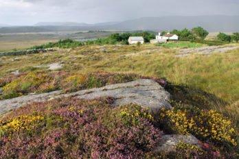 Ирландию называют изумрудным или зеленым островом. Благодаря уникальному островному климату ирландские луга почти круглый год покрыты цветочным ковром. Фото Владимира Ештокина