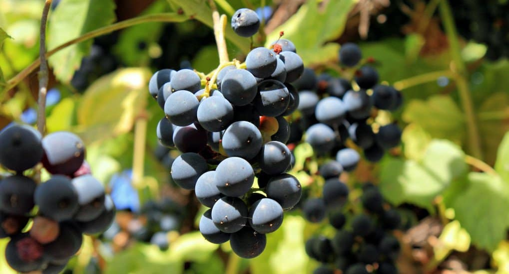 притча о виноградарях