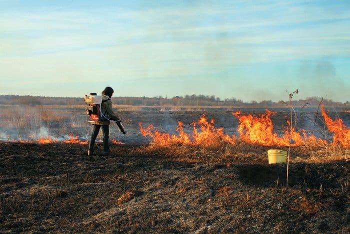 Тушение пожара в подмосковном заказнике «Журавлиная родина», 2010 г. Фото с сайта www.miloserdie.ru
