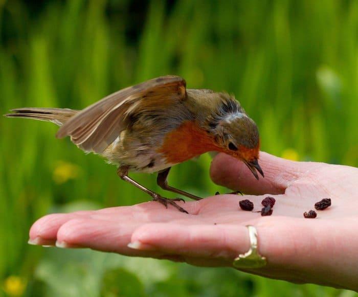 Доверие, птица