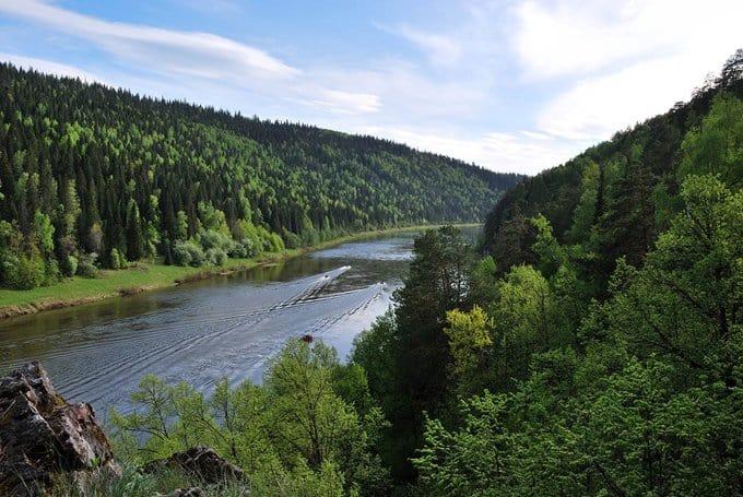 В Церкви помолились о сохранении российских лесов