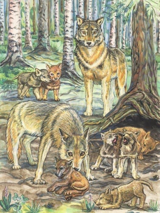 Волчья нежность