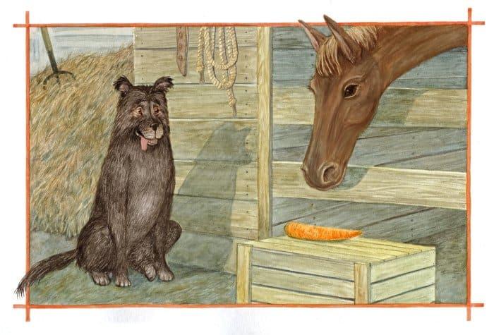 морковка для лошади1