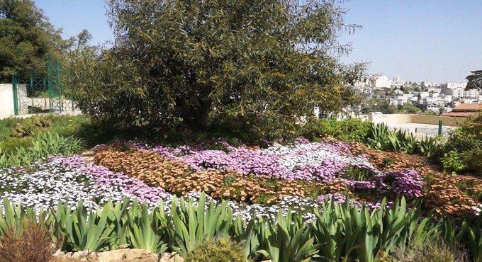 В саду Русской миссии в Хевроне можно будет увидеть библейские растения