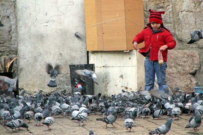 syria 1349
