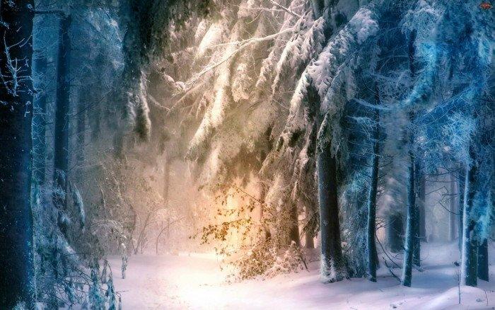 Фото Рождества: елки