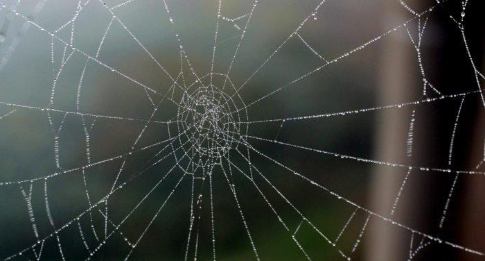 Грех ли убить паука?