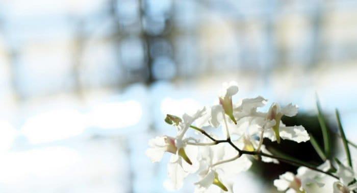 Грех ли причаститься в Великую субботу и потом на Пасху?