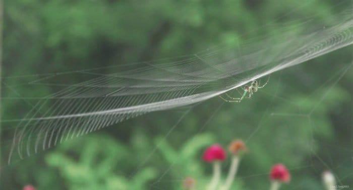 Что значит на Вознесение увидеть паука?
