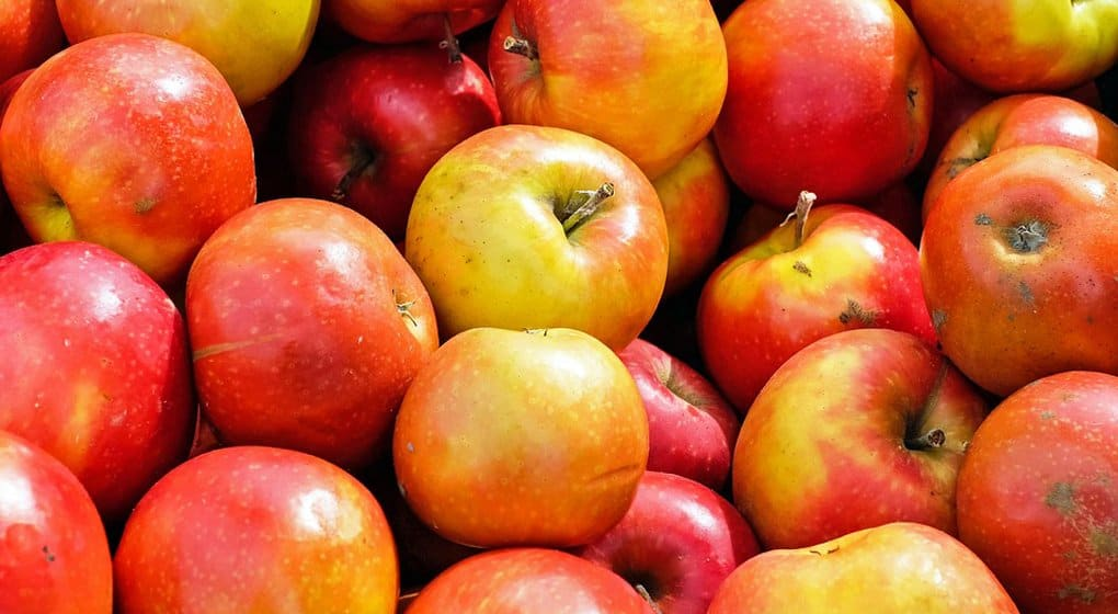 Фрукты и овощи для бездомных и пожилых принимает служба «Милосердие»