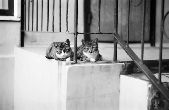 """Коты в объективе """"Фомы"""""""