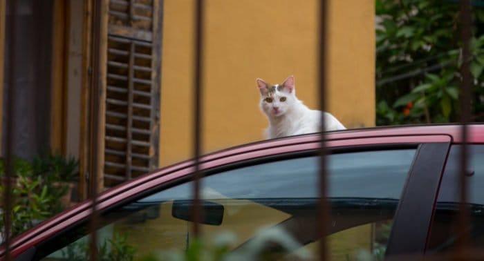 Кот и бампер