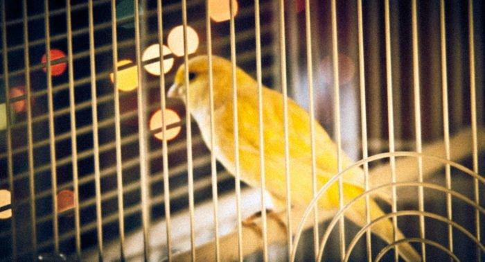 Птичку на волю
