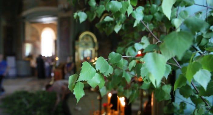 На Троицу москвичам раздадут более 5 тысяч освященных ветвей березы