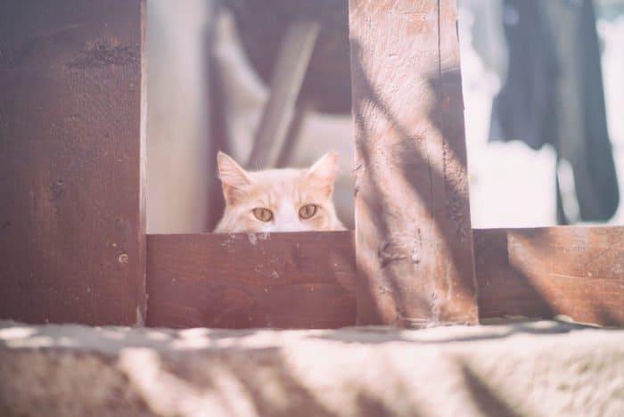 Светкины кошки