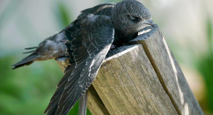 Что делать с больной птицей?