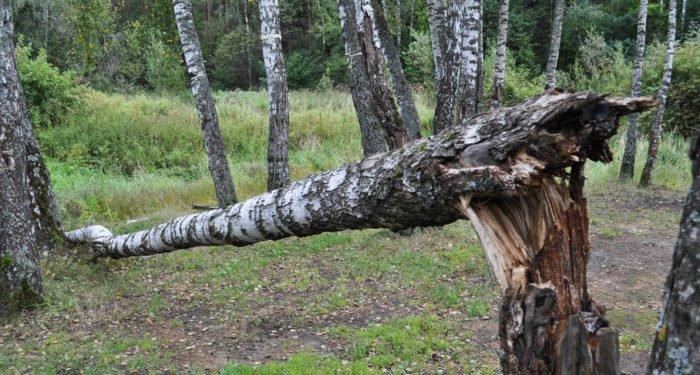 Патриарх Кирилл назвал национальной катастрофой ситуацию с лесами в России