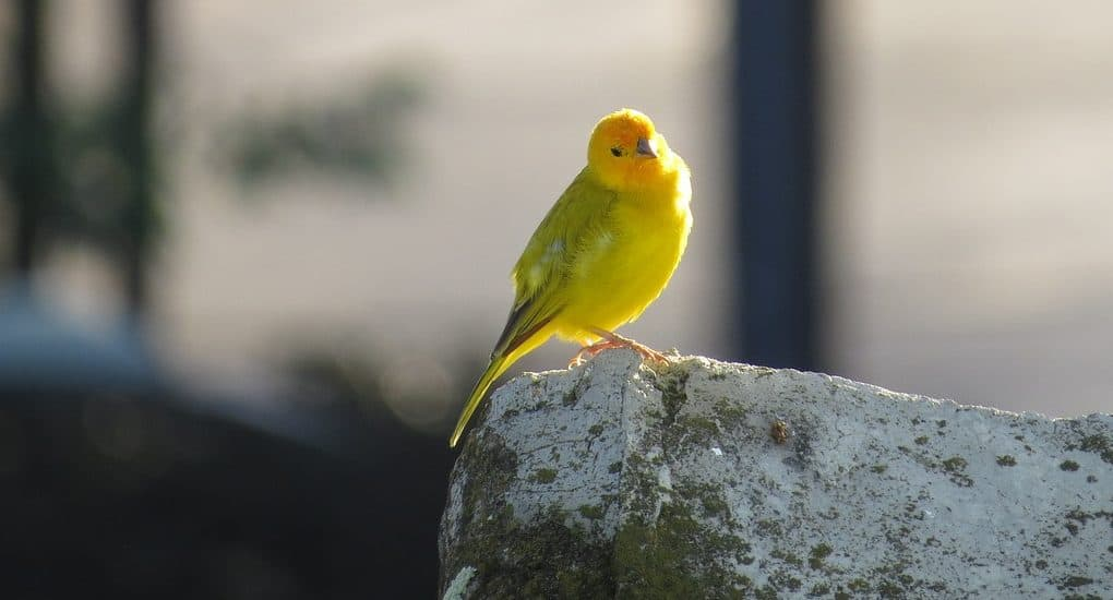 Виновата в смерти птиц, что делать?