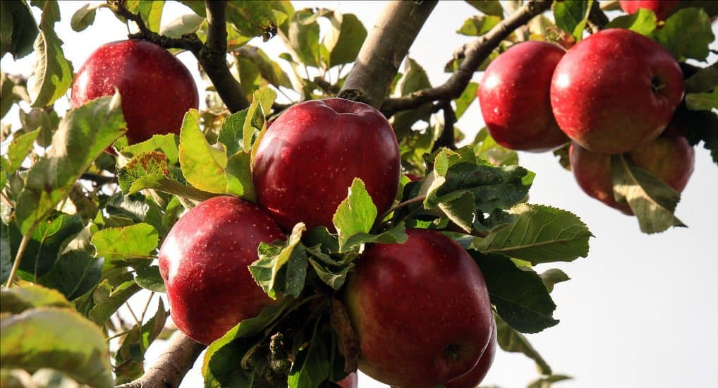 Когда Яблочный Спас 2019?