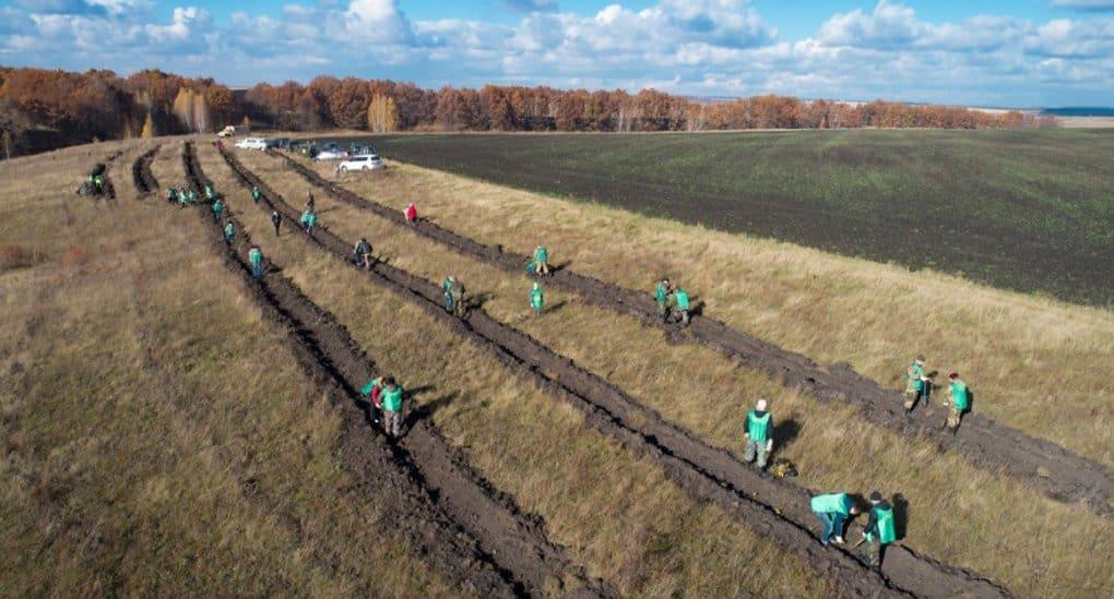 В память о героях Куликовской битвы высадили 4 тысячи дубов