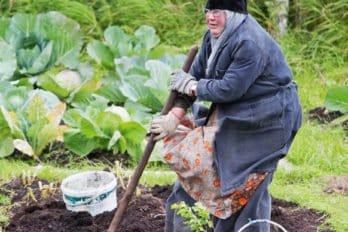 Мать Калиса копает картошку на огороде