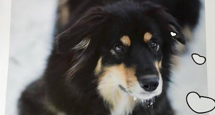 Симбирская епархия выпустила календарь в поддержку бездомных животных