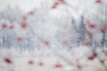 Новогоднее настроение. Фото Дениса Романова