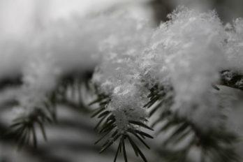 Снежинки. Фото Ольги Чехановой