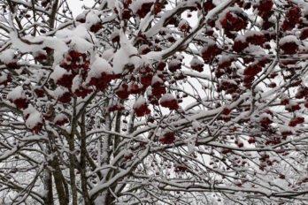 Зимние красоты. Фото Ольги Кондратьевой-Бормотовой