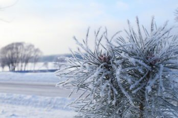 Зимняя сказка. Фото Оксаны Володиной