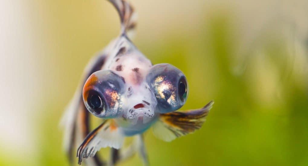 Когда можно есть рыбу в Великий пост 2019 года