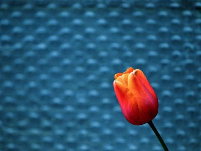 12 стихотворений о Великом посте