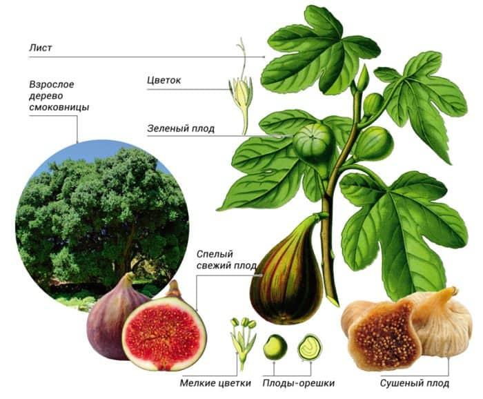 Растения в Евангелии