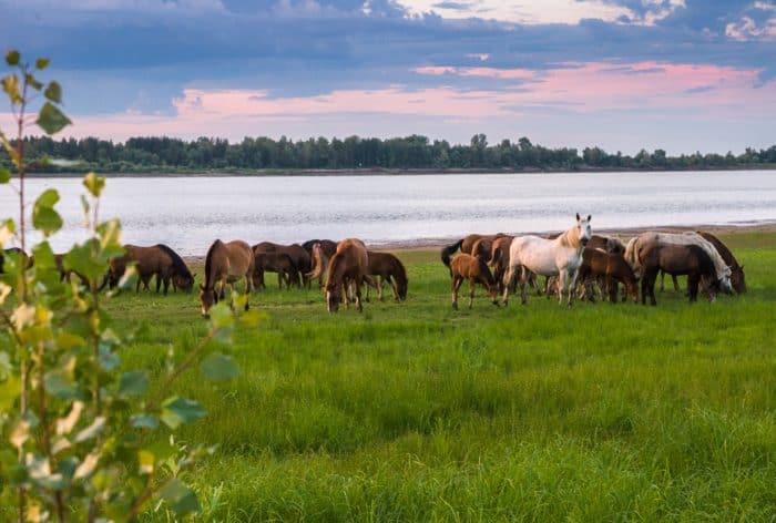 Жизнь у реки: фотозарисовки сибирского фотографа - фото 8