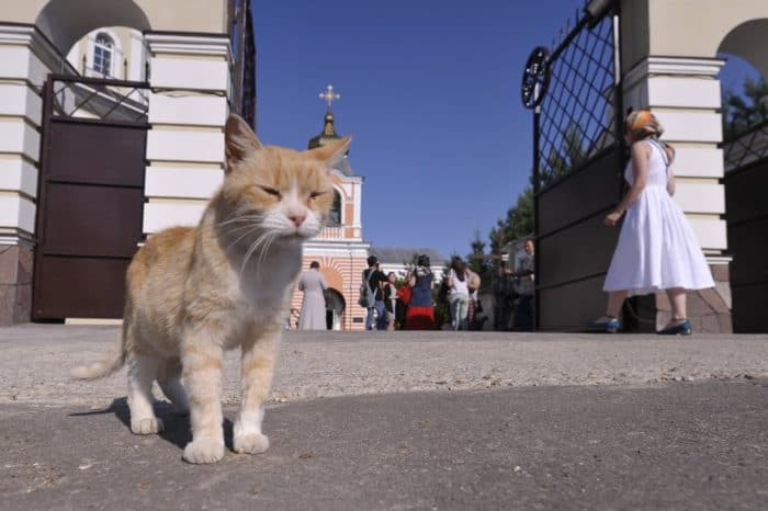 Cats in the church: in the suburbs served an unusual prayer