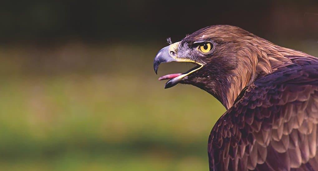 Волгоградские монахи будут ухаживать за спасенными от гибели птицами