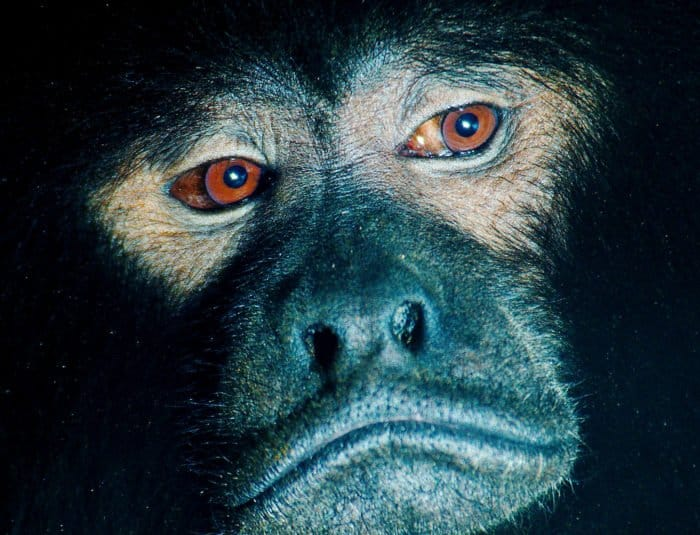 Что говорит Библия про динозавров и обезьян: отвечаем детям