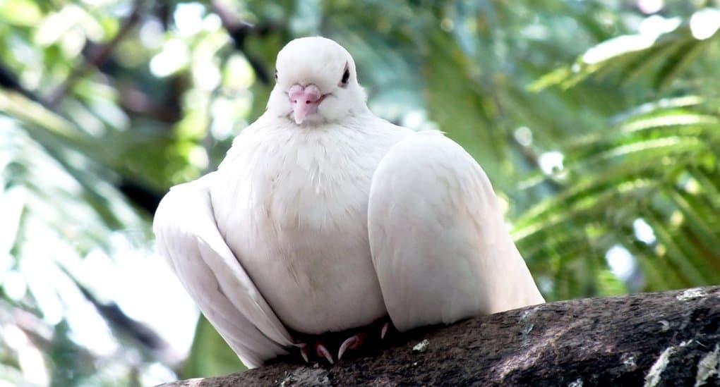 Прилетал белый голубь. Это душа моего сына?