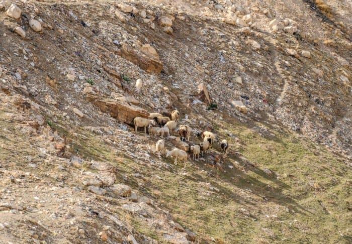 Иудейская пустыня в ожидании Пасхи: 20 потрясающих видов - фото 5