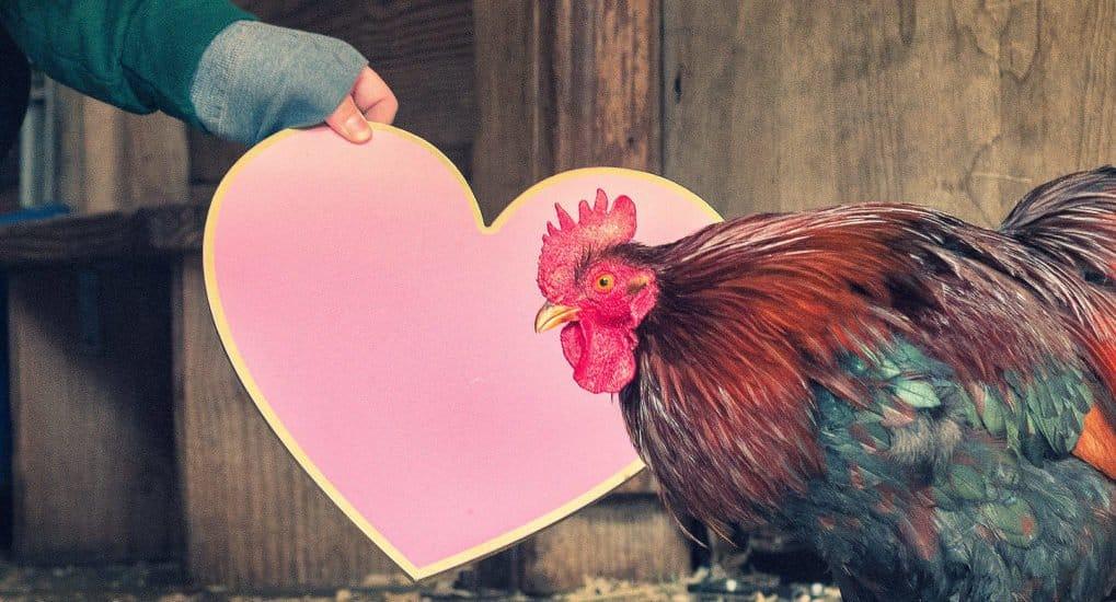 «Пост— непро курицу, апро любовь». Чем опасен этот лозунг?
