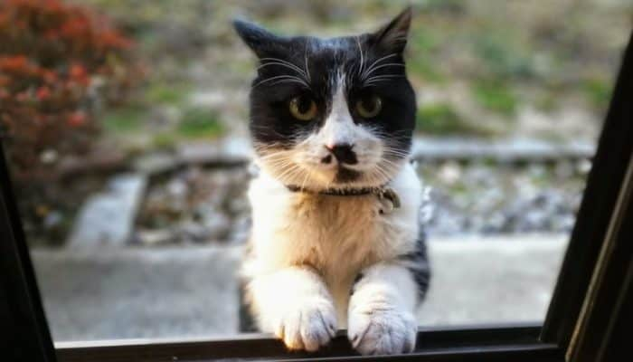 Как кот заставил своего хозяина бросить пить — реальная история от Юрия Куклачева
