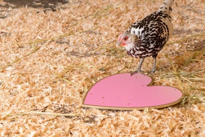 """""""Пост - не про курицу, а про любовь"""". Чем опасен этот лозунг?"""