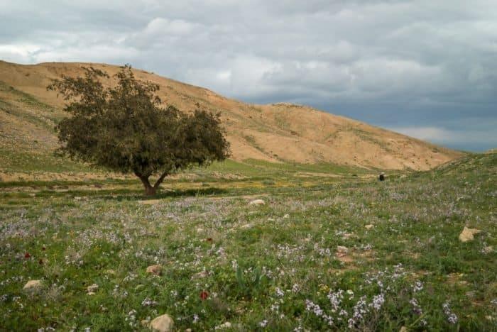 Иудейская пустыня в ожидании Пасхи: 20 потрясающих видов - фото 10
