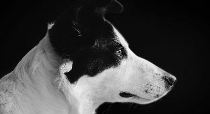 Кто плачет по мертвым собакам — история, рассказанная 13-летним мальчиком