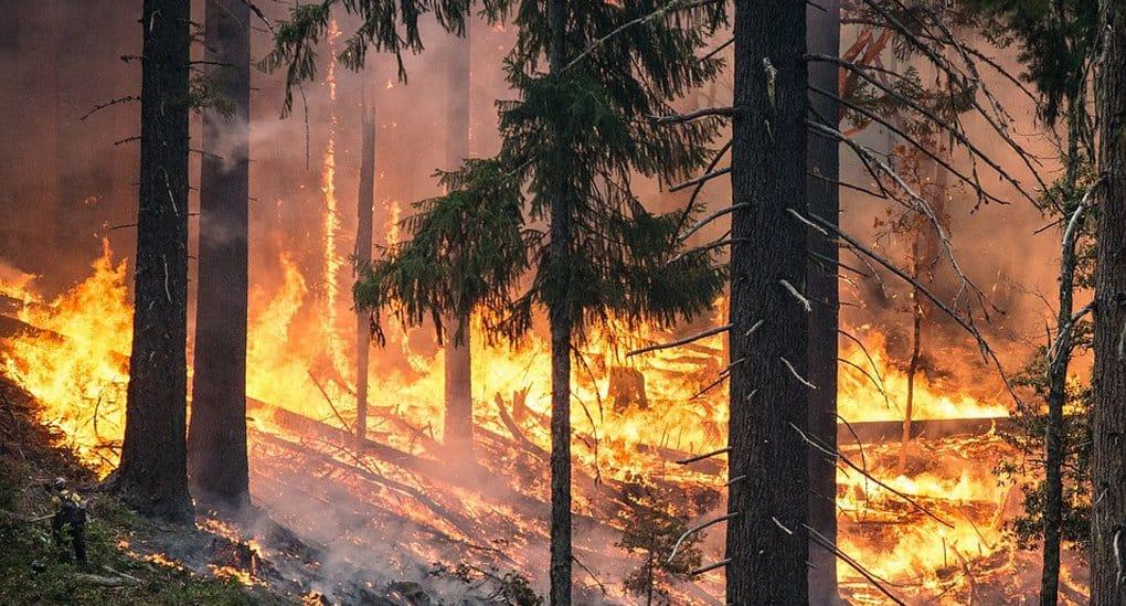 Режим ЧС из-за лесных пожаров введен в пяти регионах России