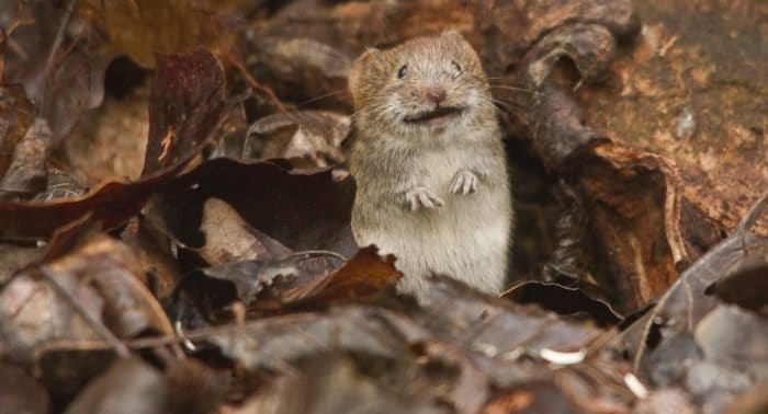 Грех ли убить мышь?