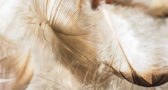 Неужели у ангела может быть такой голосина? — случай в доме священника на Рождество