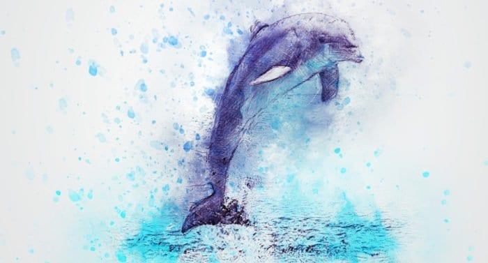 Как по совету деда я решила стать дельфином